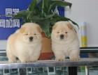 本地正规犬场一出售松狮犬等各种幼犬一签协议