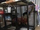 狗狗笼子用了7天