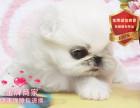 精品繁殖京巴幼犬 可爱温顺包健康包纯种可自提