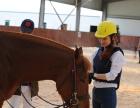 浙江马汇马术国际庄园-骑马 摄影
