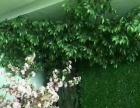 植物墙绿墙立体绿化垂直绿化等