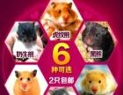 金丝熊 常年出售,批发,零售金丝熊,小仓鼠,松鼠