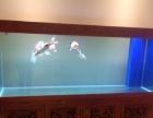 乐天阳生态鱼缸常年无需换水、省心、省力、省电、省水,400