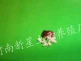 河南新星土元养殖示范基地加盟 投资金额 1万元以下