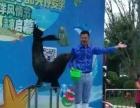 株洲海狮表演公司海狮表演价格海狮杂技表演