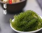 绿色珍珠海葡萄