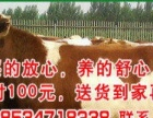 小牛价格牛犊价格出售肉牛犊