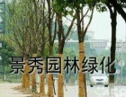 收苏州地区香樟、广玉兰、榉树、朴树、丛生朴树、桂花
