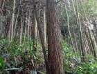 三明明溪县428亩林地转让