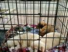 帮朋友转4只可爱小猫咪1个多月了,什么都能吃。