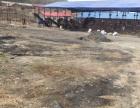 西安区灯塔乡北环城路烈士 厂房 10000平米