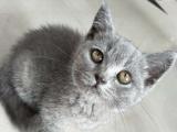 可爱的胖蓝猫,看看哟