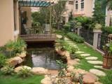 海淀庭院綠化 黃楊苗木月季種植