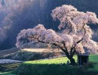 塘沽 山木培训 日语暑假班