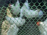空调用网 阻燃王 塑料平网 水产养殖网