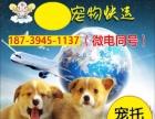济宁宠物托运宠物托运 航空运输 大巴运输