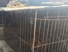 藏獒大型狗笼子