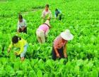 大朗农副产品配送 高效快速送货上门 鑫博泰膳食