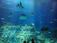 重庆万盛往返出发港澳五日纯玩游海洋公园暑期预定2989元全含价