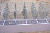养殖用不锈钢电焊网 养鸡电焊网厂家 鑫广丝网