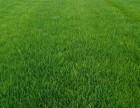 北京房山 丰台 海淀 大兴 昌平 通州园林绿化草坪混播草坪