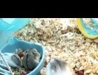 历奇乐园仓鼠笼和花仓仓鼠