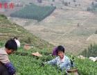 安溪铁观音新茶上市福建省安溪小志茶厂