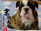 泉州哪里有卖英国斗牛犬的