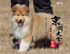 郑州有卖苏格兰牧羊犬的吗