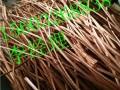东营废电缆回收东营废铜烂铁多少钱回收废旧电缆回收