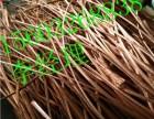 承德回收废电缆