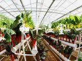 无土栽培蔬菜,专业的无土栽培供应商推荐