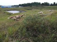 黄冈红安农场整体对外承包