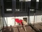 泰華龍旗廣場寄養貓貓狗狗 春節寄養預訂中可接送單間寄養散養
