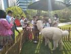 上海闸北区羊驼转租-租赁草泥马-小羊驼出租-婚礼庆典婚纱拍摄