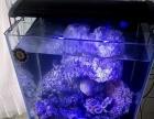 转让一套超白玻璃海水缸