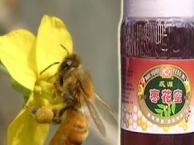 蕊源蜂业 蕊源蜂业诚邀加盟