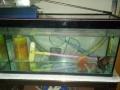 鱼缸出售付赠送鱼