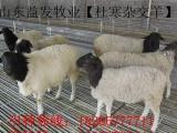 云南临沧康养殖牛 羊 驴 马 骡就到益发