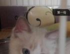 布偶猫3000元