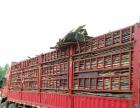 高价回收旧方木竹胶板建筑废料