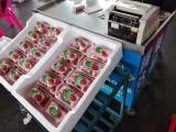 批发收购草莓