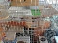 出售闲置的龙猫笼子