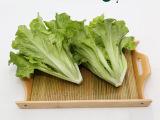西充百科有机园有机叶生菜 新鲜美味 有机蔬菜 基地直供时令蔬菜