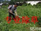 专业荒地除野草 杂草 草坪修剪维护 绿植修剪 公园除草