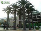 深圳市江南园艺假树定制厂家,仿真树有哪些种类