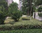 新城区常绿大阅城3室123平可贷款仅此一套