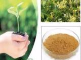 厂家供应中药提取物和中药颗粒