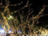 安康承接树木亮化街区园林亮化布展
