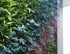 普陀金沙江路附近仿真花、屋顶绿化、垂直绿化公司